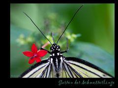 Garten der Schmetterlinge (1)