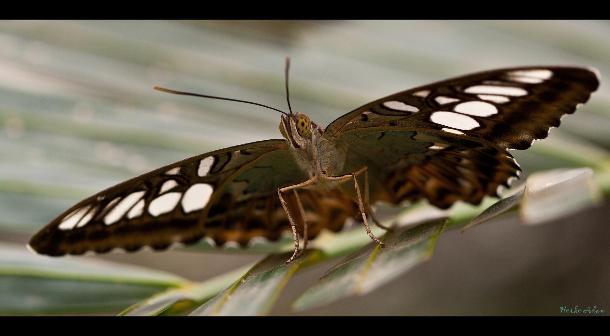 Garten der Schmetterlinge (2)