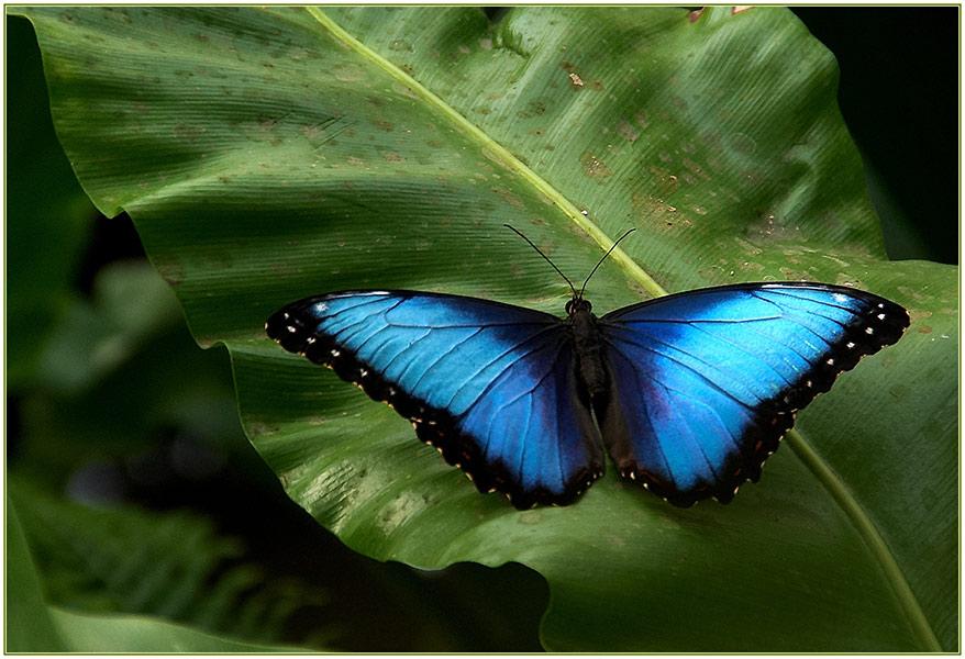 Garten der Schmetterlinge 2