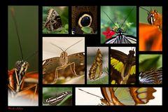 Garten der Schmetterlinge (3)