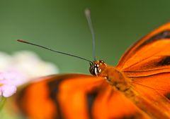 Garten der Schmetterlinge (4)