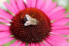 Garten Eden für eine Honigbiene