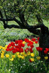 Garten einer 95-jährigen Dame