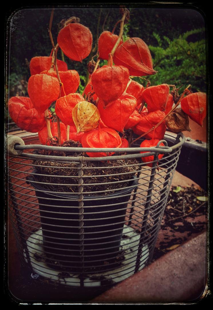Garten Entdeckung