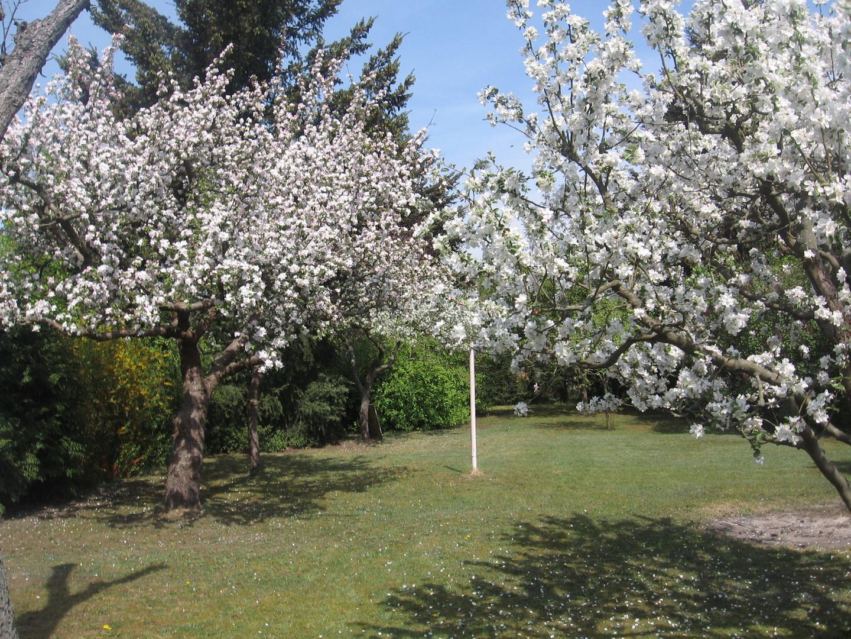Garten, my garden