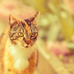 Garten-Tiger auf Streifzug