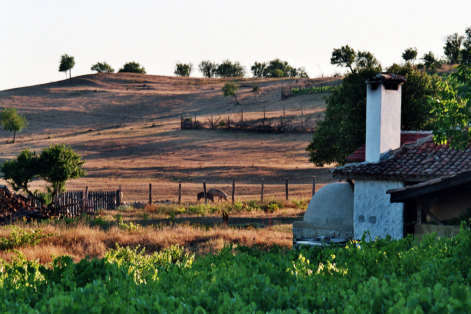 Garten Und Backofen Foto Bild Europe Balkans Bulgaria Bilder