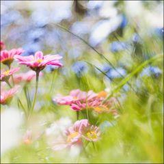 Garten_160505_095_Orig