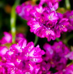 Gartenansichten II