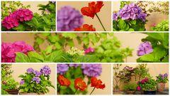 Gartenblümchen