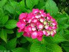 Gartenblüte I