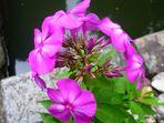 Gartenblüte II