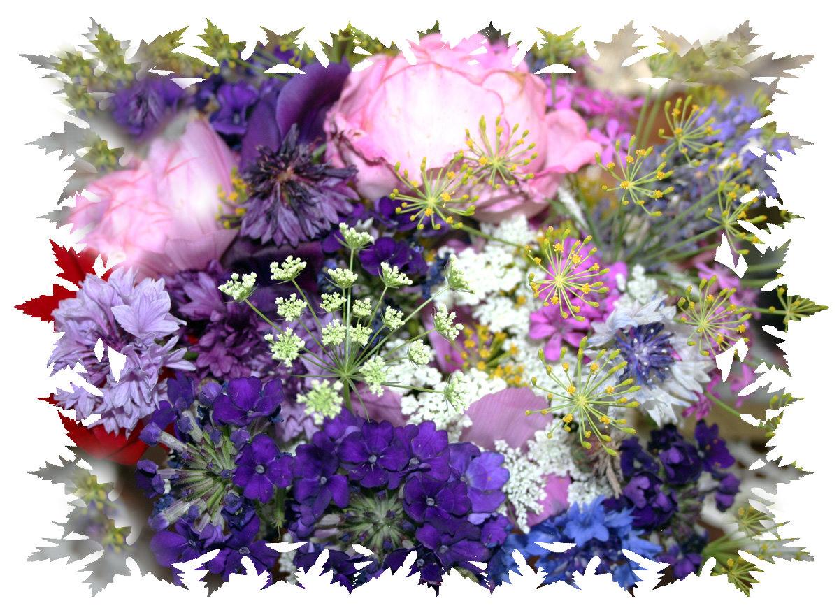 gartenblumen foto bild pflanzen pilze flechten bl ten kleinpflanzen gartenpflanzen. Black Bedroom Furniture Sets. Home Design Ideas