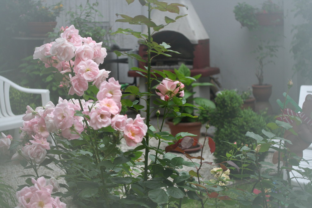 Garteneinblick mal anders