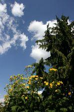 Gartengruß für alle Fotofreunde