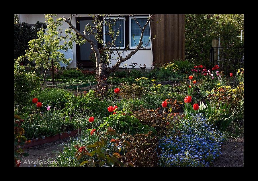 Gartenimpression #1