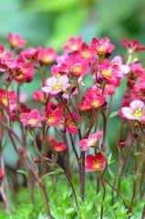 * Gartenpolster *