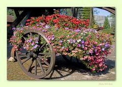 Gartenpracht 5