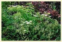 Gartenpracht 6