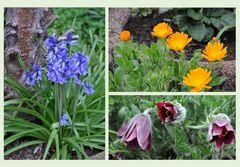 Gartenrundgang (11) - Blütenmix