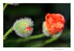 Gartenrundgang (7_1)