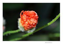 Gartenrundgang (7_2)