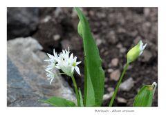 Gartenrundgang (9)