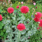 Gartensaison 2009