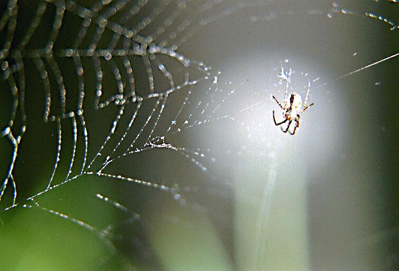 """""""Garten""""Spinne"""