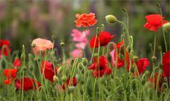 Gartentage 1
