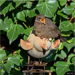 Gartenvögel...