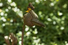 Gartenvogel-2633