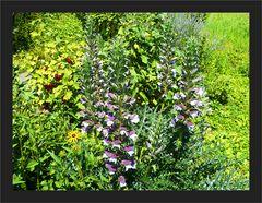 Gartenwildnis