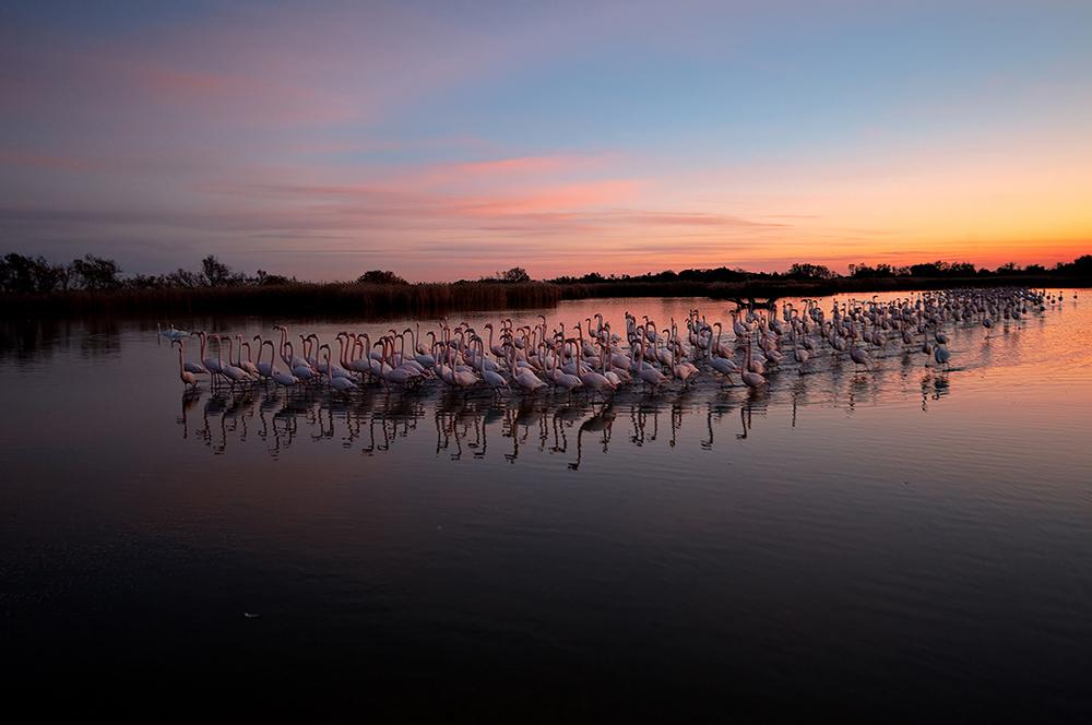 Gathering at dusk