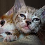 gatito loco con ojos desorbitados