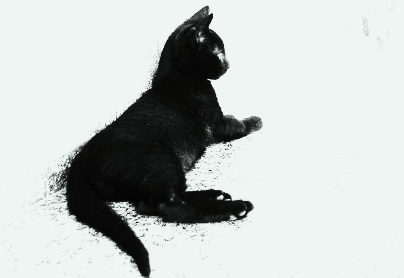 Gato - Brasil