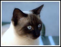 gato de pinos spain