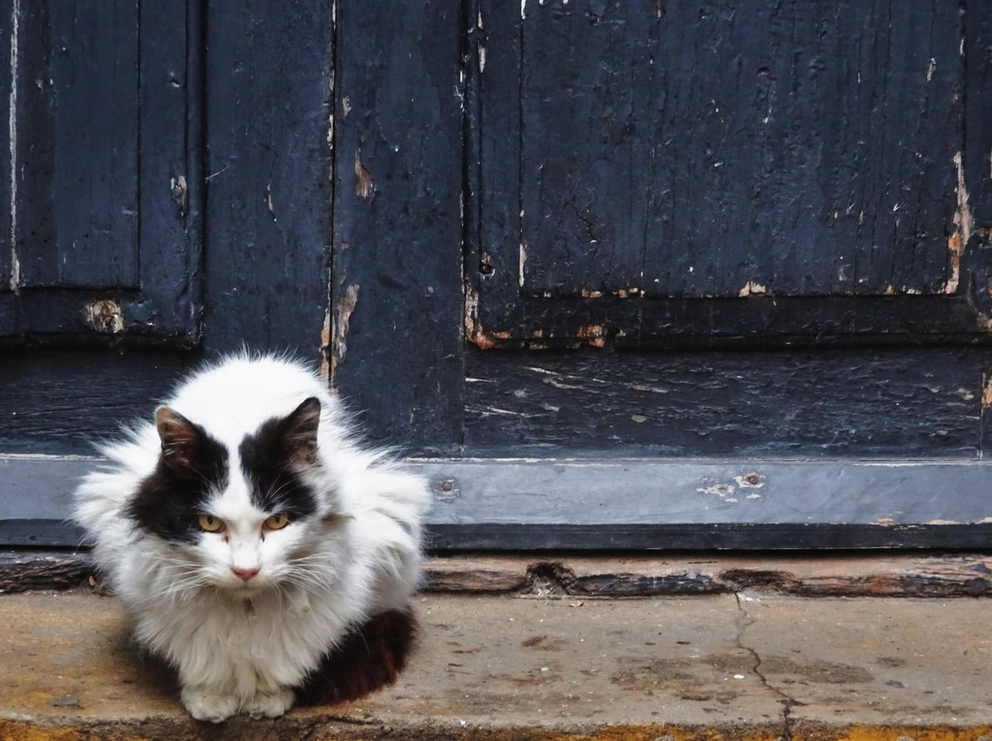 Gato de Recoleta