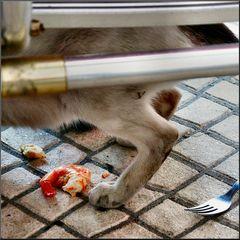 Gato randagio mangia benissimo :-))