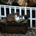gatos a la interperie
