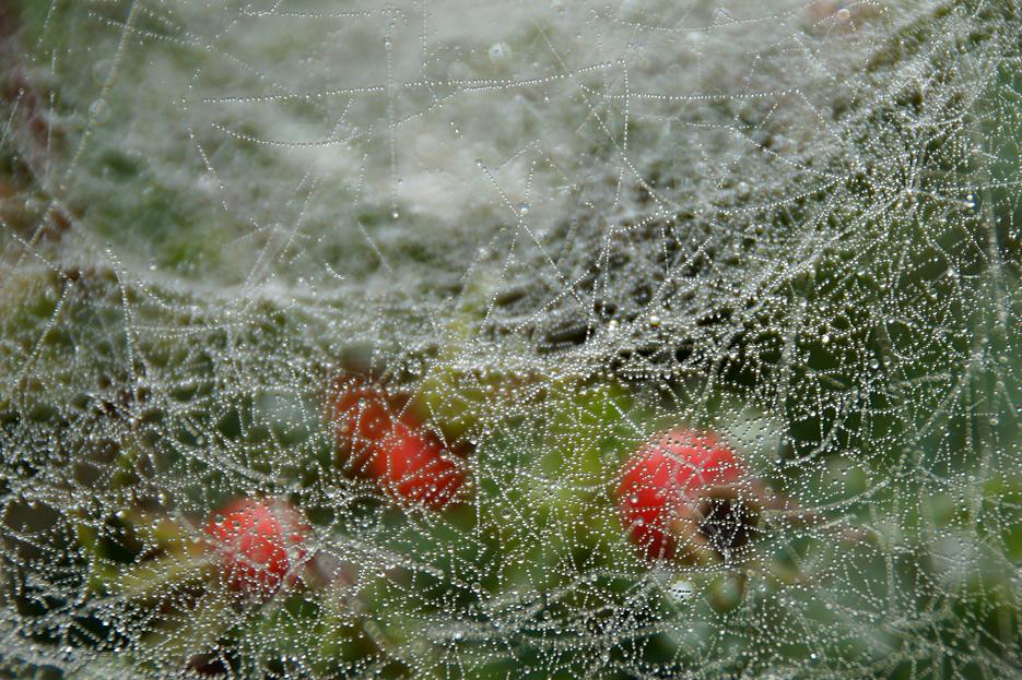 Gatow und Sacrow im Nebel, 03.09,19 – 09