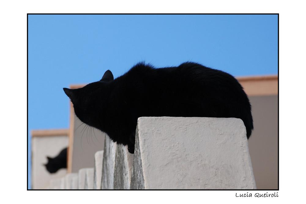 gatti del Salento