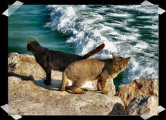 ..gatti di mare..
