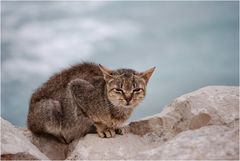 Gattino randagio di mare
