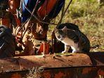 Gatto agricoltore
