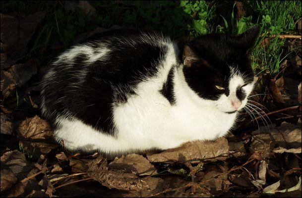 Gatti immagini e foto for Il gatto inverno