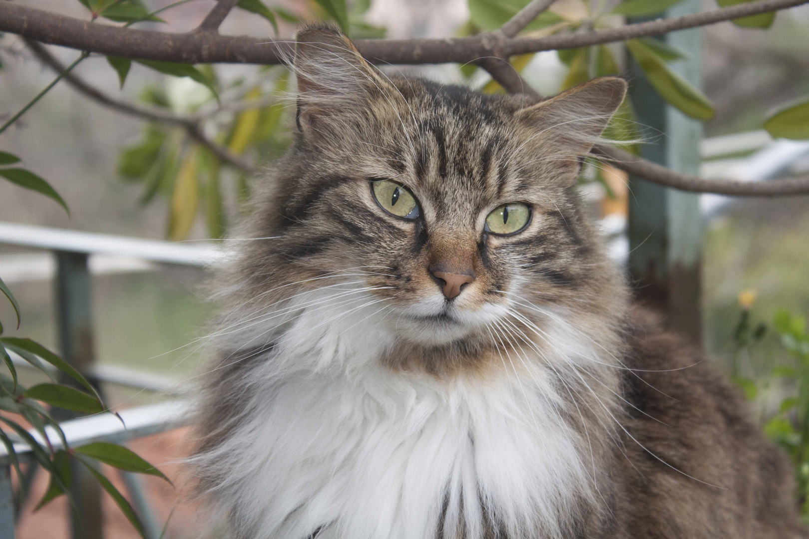 Gatto Dagli Occhi Verdi Foto Immagini Animali Animali Domestici