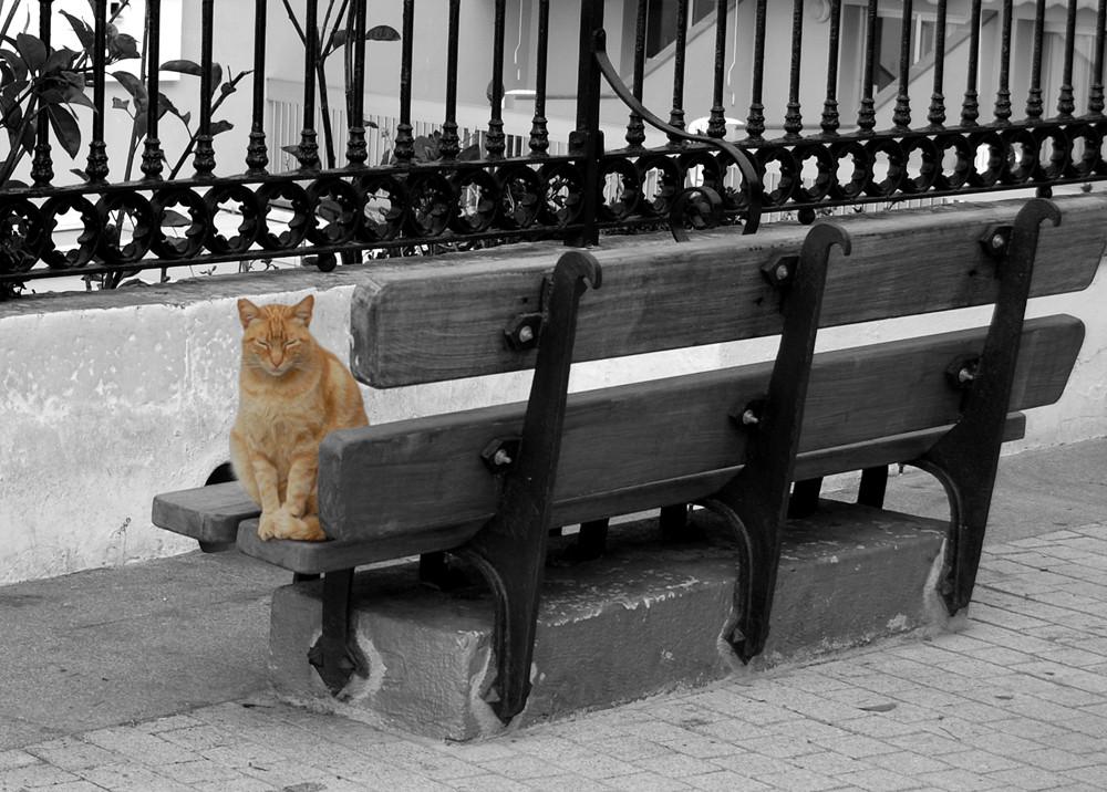 Gatto di Malaga