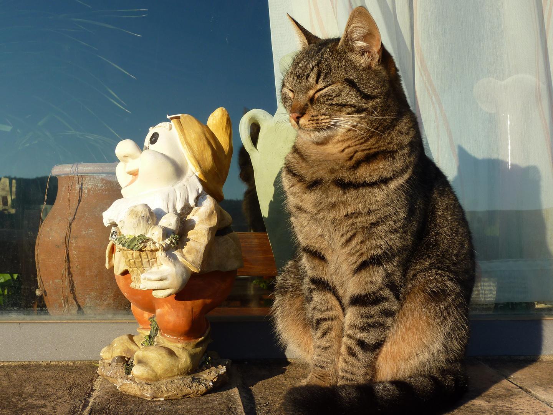 gatto e nanetto