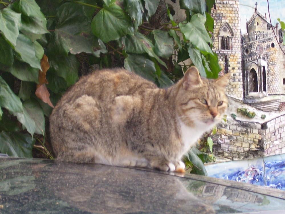gatto ERICINO